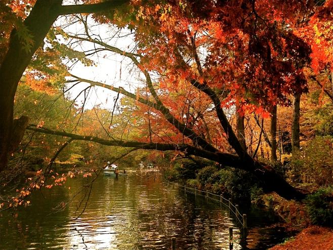 Inokashira Park - Swan boat